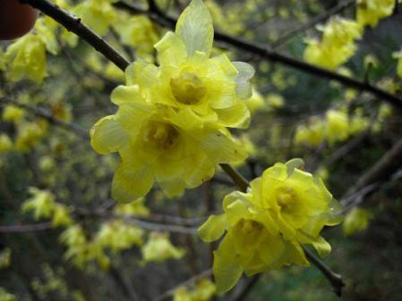 清水の花 072