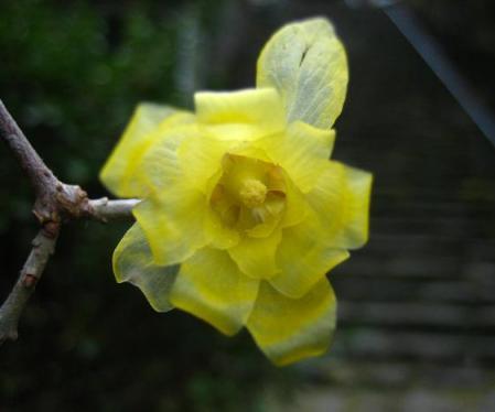 清水の花 070