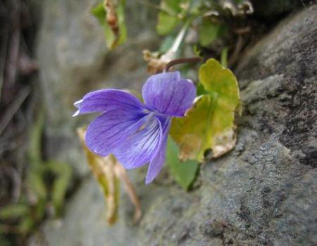 清水の花 036
