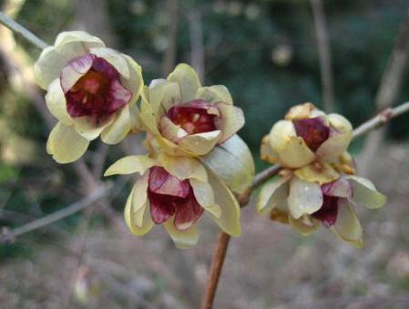 清水の花 066