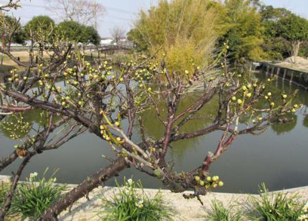 石丸山公園 006