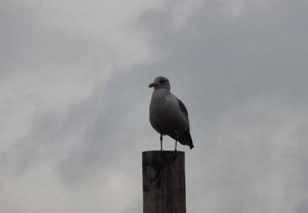 鳥 筑後川 112