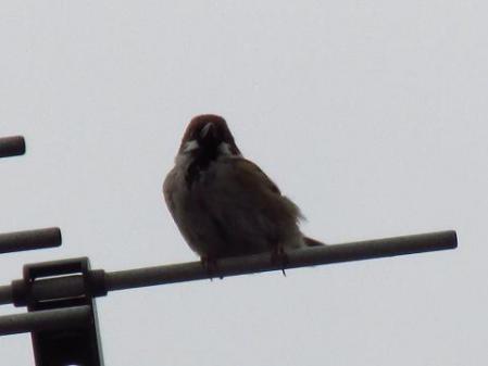 鳥 筑後川 012