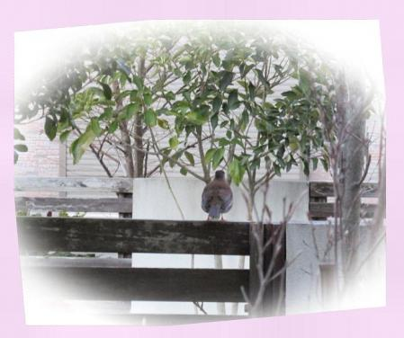朝の鳥 002