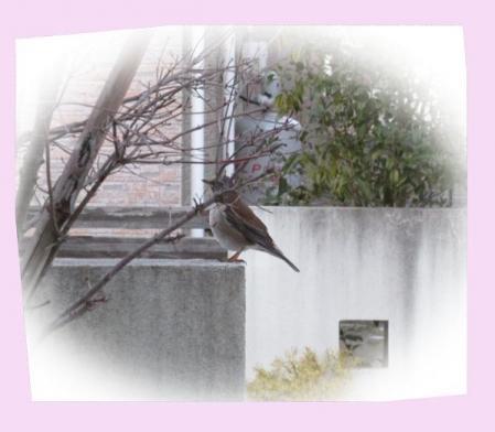 朝の鳥 001