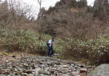 井原山とムクドリ 009