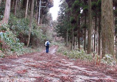 井原山とムクドリ 006