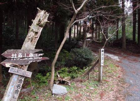 井原山とムクドリ 115