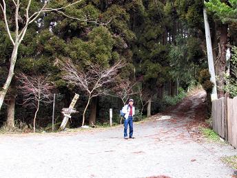 井原山とムクドリ 001