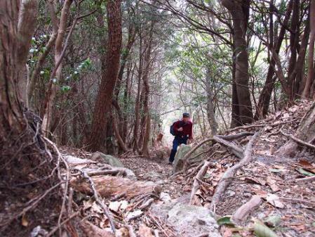 井原山とムクドリ 035