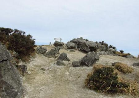 井原山とムクドリ 078