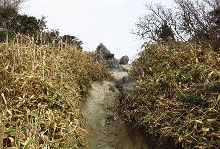 井原山とムクドリ 075
