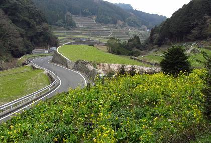 八幡岳 167