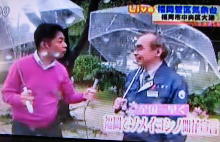 桜開花宣言 025