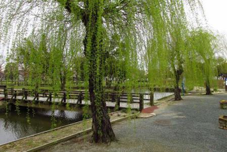 石丸山公園 022