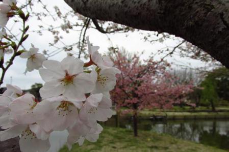 石丸山公園 020