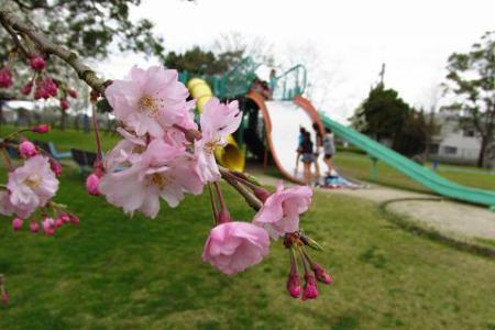 石丸山公園 059