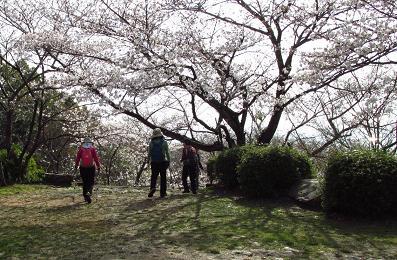 清水の桜 056