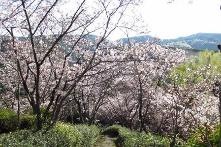 写真展と清水の桜 016