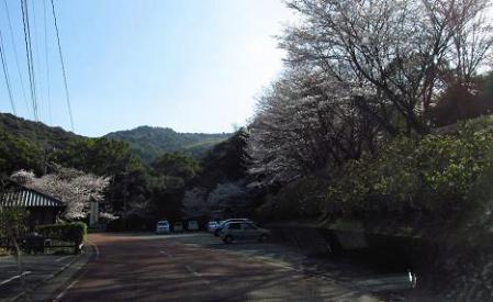 写真展と清水の桜 003