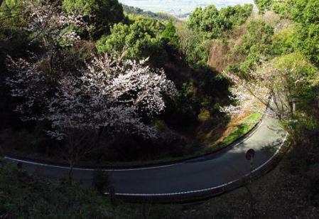 写真展と清水の桜 023