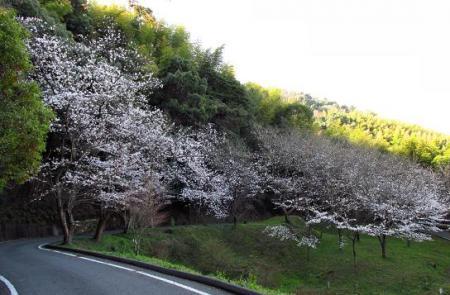 写真展と清水の桜 022