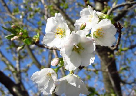 写真展と清水の桜 011