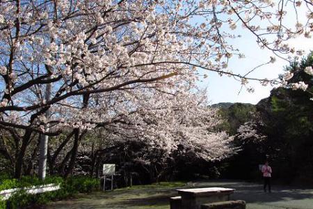 写真展と清水の桜 027
