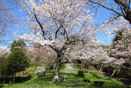写真展と清水の桜 070