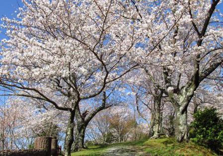 写真展と清水の桜 062