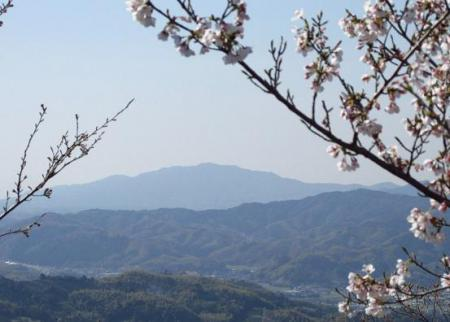 写真展と清水の桜 051