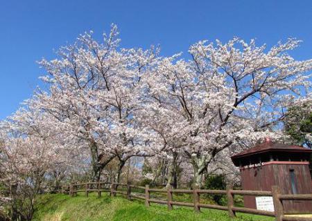 写真展と清水の桜 056