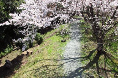 写真展と清水の桜 081