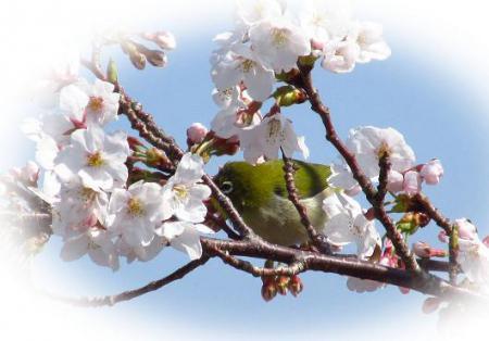 写真展と清水の桜 084