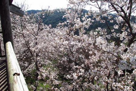 写真展と清水の桜 080
