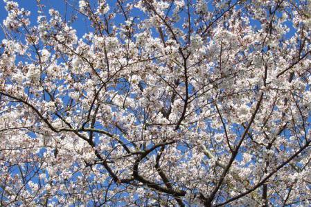 写真展と清水の桜 076