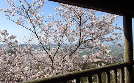 写真展と清水の桜 087