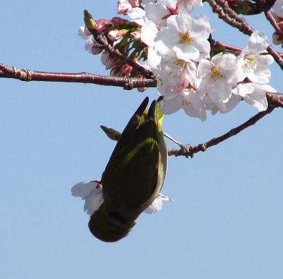 写真展と清水の桜 085