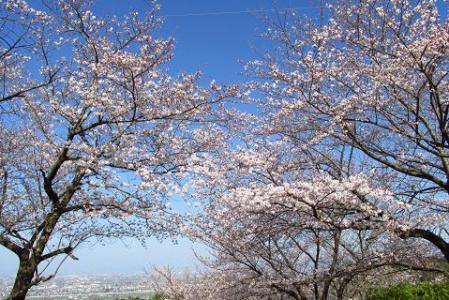 写真展と清水の桜 026