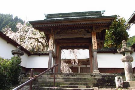 日向神ダム桜 002
