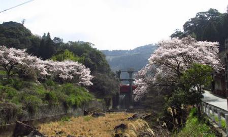 日向神ダム桜 062
