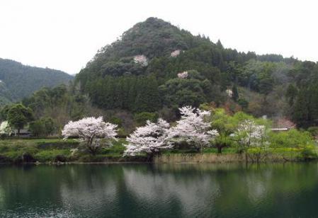日向神ダム桜 172