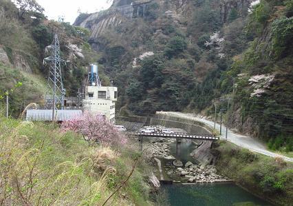 日向神ダム桜 144