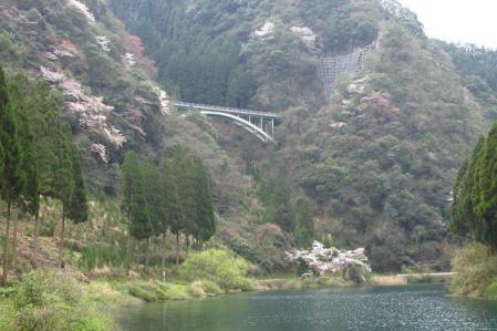 日向神ダム桜 163