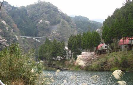 日向神ダム桜 160