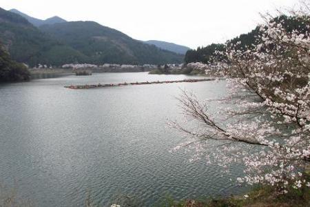 日向神ダム桜 179