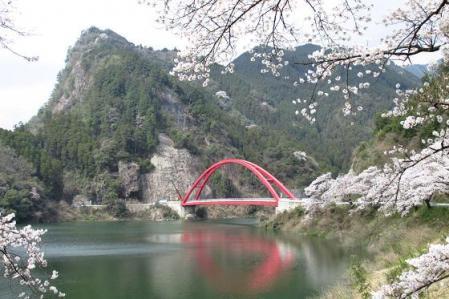 日向神ダム桜 252