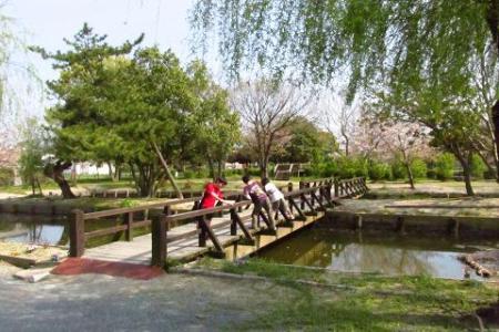 牡丹と桜公園 046