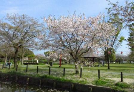 牡丹と桜公園 089