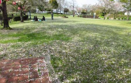 牡丹と桜公園 062